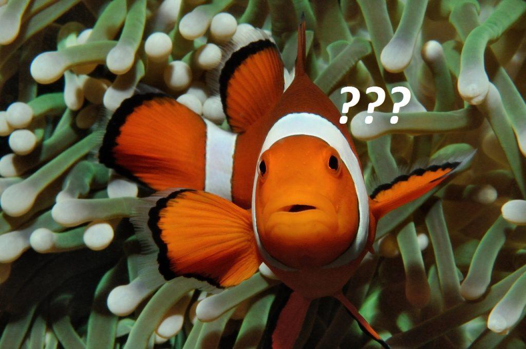 Clownfisch -artemia züchten